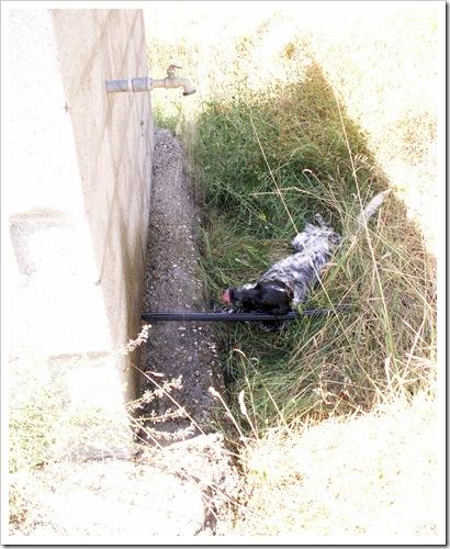 stesio54 - La zara che beve e gioca con l'acqua