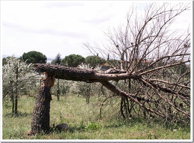 stesio54 - natura spezzata